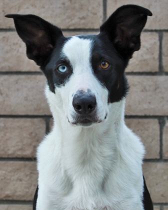 FLASHMcNab ♂2x California State Disc Dog ChampionTKA