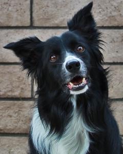 https://k9spiritkirby.wordpress.com/dogs/sketch/