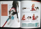 Flash, Pages 124 & 125, 10-Minute Dog Training Games