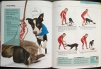 Torch, Pages 116 & 117, 10-Minute Dog Training Games