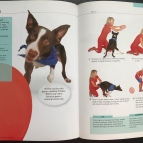 Torch, Pages 118 & 119, 10-Minute Dog Training Games