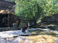 Grist Mill, (.6 mile)