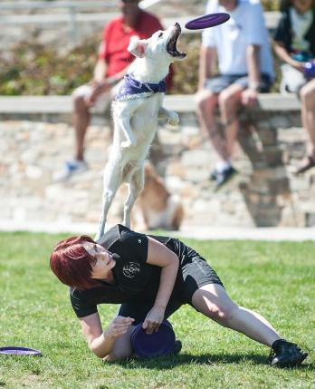 Spirit performing at the Lake Forest Pet Expo