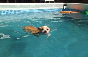 Rebel goes for a swim...