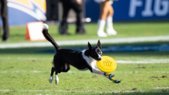 Sora performing for the Chargers at halftime