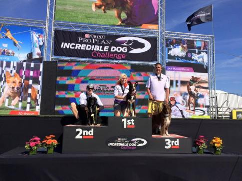 4x Purina Incredible Dog Challenge Western Regional Champion Torch!