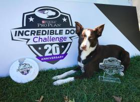 2017 Purina Incredible Dog Challenge National Champion!