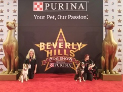 Torch and Sora get ready to perform at the 2019 Beverly Hills Dog Show!