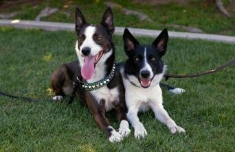 Best friends! Volt & Sora