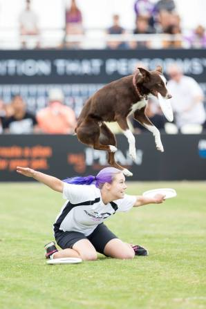 Torch from one of his many appearances on the Purina Incredible Dog Challenge!