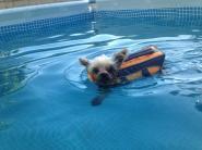 Cooper's first swim!