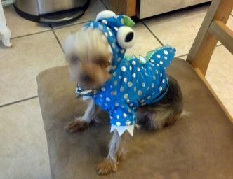 Cooper being a spaz in his Halloween costume